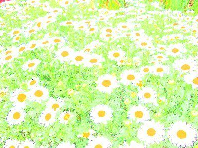 Yuyu_12